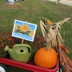 Pumpkins galore in town during the celebration!